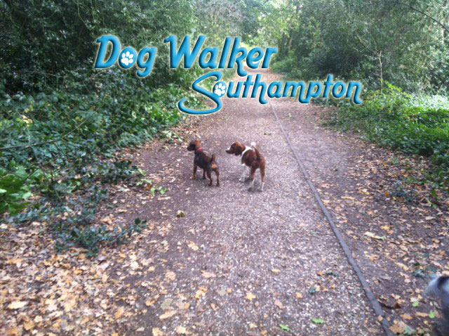 dog-walker-oct1