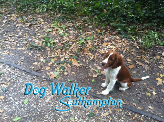 dog-walker-oct3