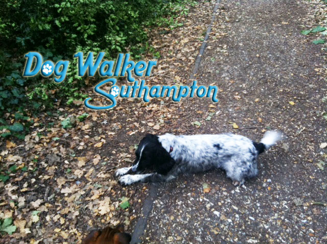 dog-walker-oct4