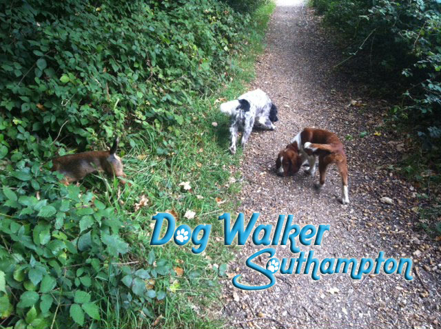 dog-walker-oct5