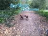 dog-walker-oct1