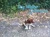 dog-walker-oct2