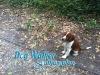 dog-walker-oct3
