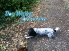 dog-walker-oct4